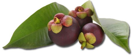 The Most Ideal Garcinia Cambogia Dosage Health Blog Health Blog
